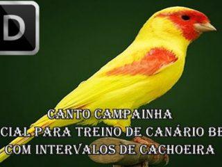 BAIXAR JANDAIA CANTO DE